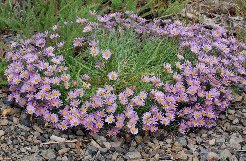 Комнатные растения Украина, цветы по каталогу Запорожье 49