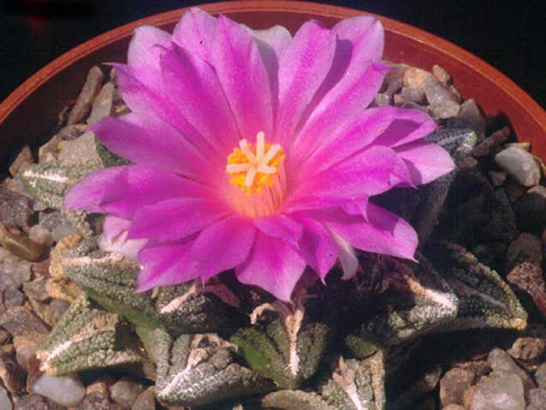 кактусы зимой уход в домашних условиях