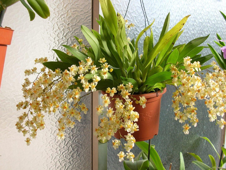 виды орхидей и уход в домашних условиях с фото