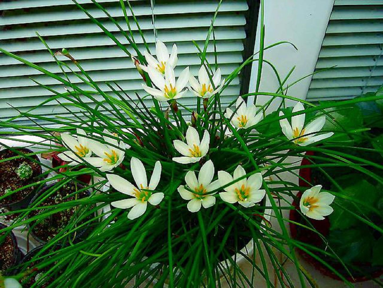 Энциклопедия цветов с белыми цветами