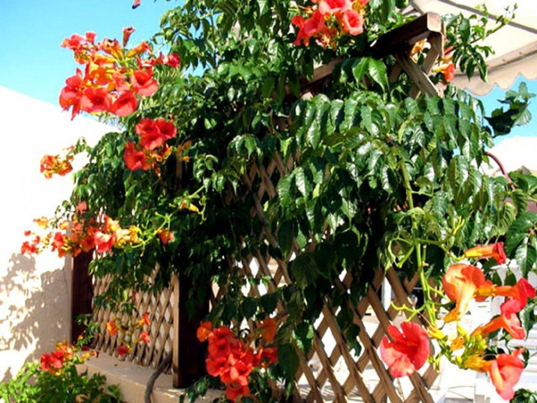 Как выглядит цветок лиана фото