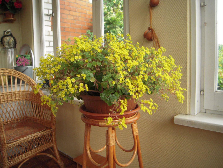 Комнатные цветы и приметы
