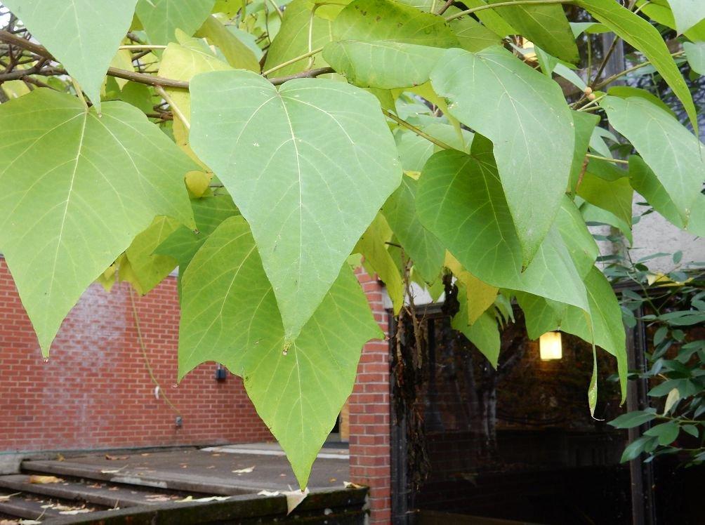 редактор журнала фото дерева с крупными листьями внешность идеальные